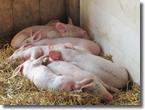 FXバランサーも豚ちゃんもお眠り中